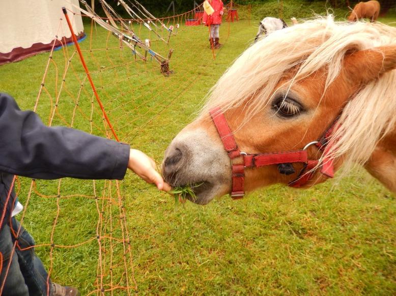 Pferd füttern
